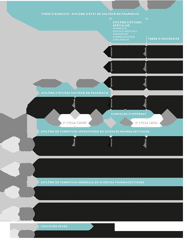 Schéma des études de pharmacie